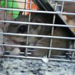 flying squirrels found in attics 37205